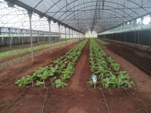Fine fine greenhouse farm in Sagamu